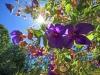 REAR-YARD-FLOWERS
